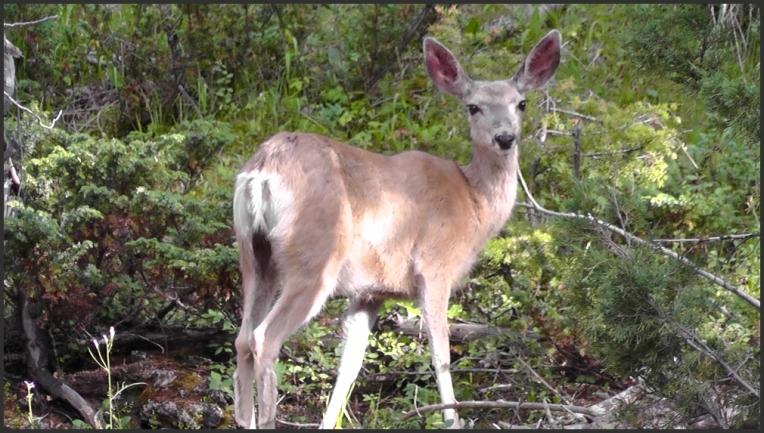 Wildlife 4