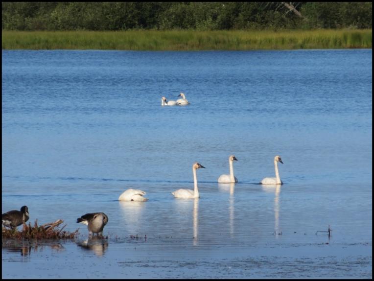 Seney Refuge wildlife paradise