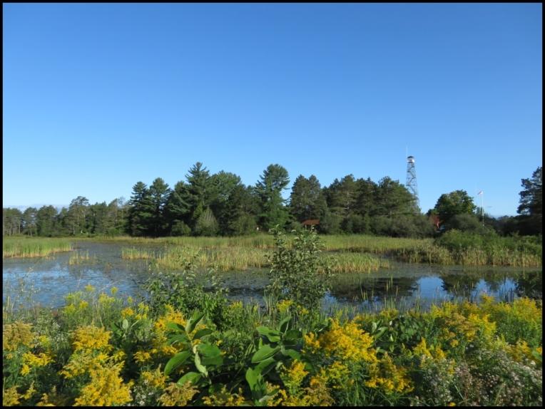 Seney wetland