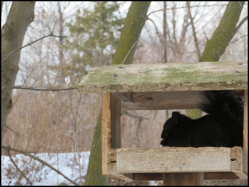 Squirrel eating birds food