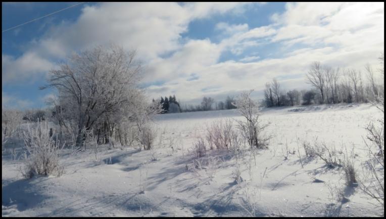 Winter landscape 2