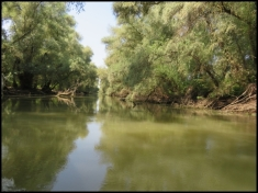 Mahmudia - channel