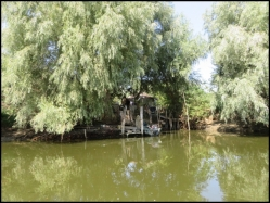 Fisherman shelter hidden under the treees