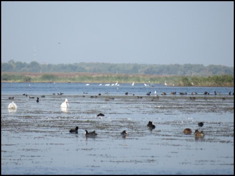 Mahmudia - The little paradise of all birds