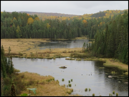 Beaver pond Trail - 2 beaver lodges