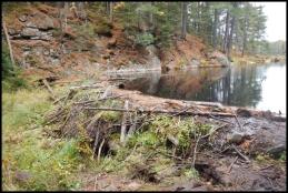 Beaver pond Trail - beaver dam