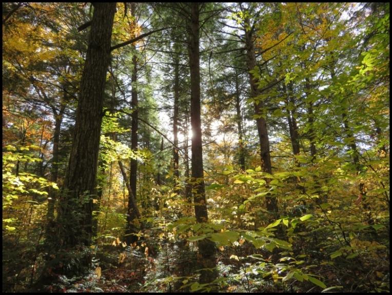 Hemlock Bluff Trail - variety of trees