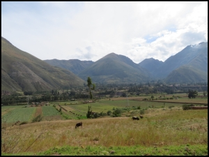 Sacred Valley pastures