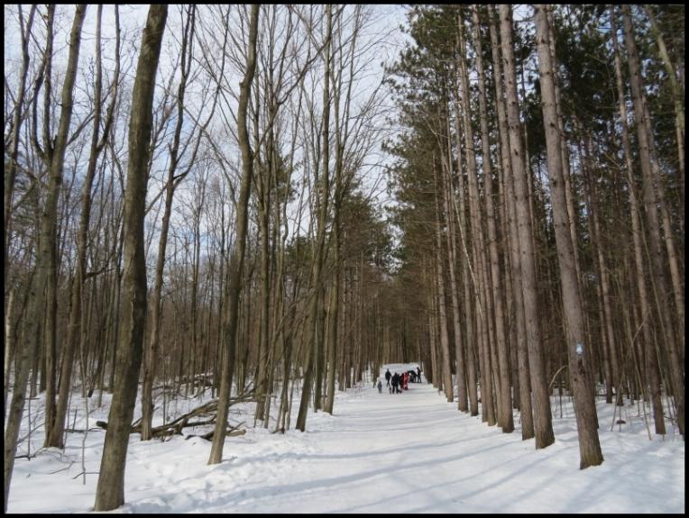 Hilton Falls trail