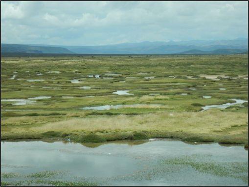 Tocra swamps