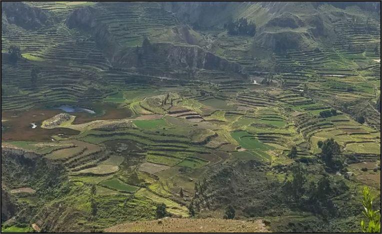 Colca Canyon - terraces