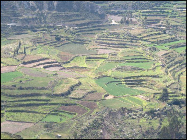 Colca Valley - terraced fields