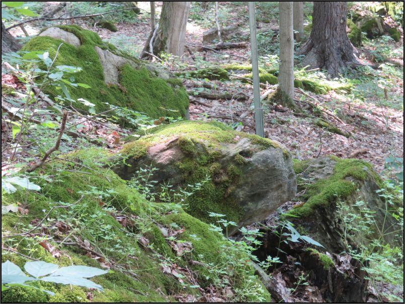 Dundas Valley Conservation Area